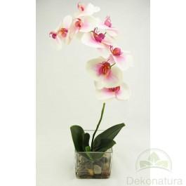 Orquidea Phalaenopsis Natur Rosa