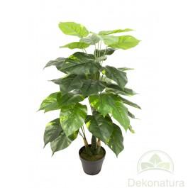 Planta Pothos
