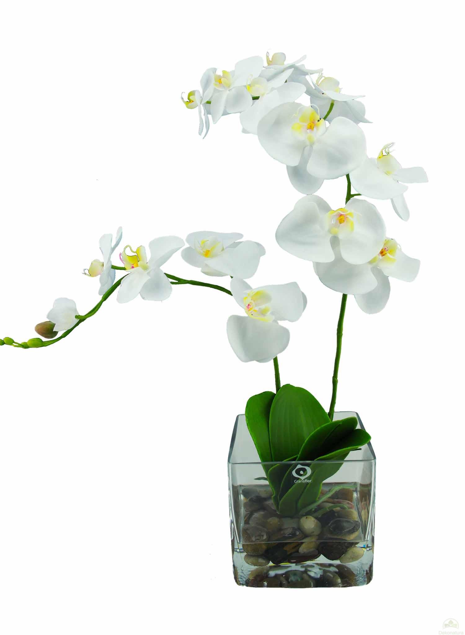 Orquidea natur x 2 en cubo cristal - Tiestos para orquideas ...