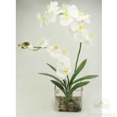 Orquidea Nature x 2 Blancas con hojas de Cymbidium