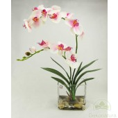 Orquidea Nature x 2 Rosa con hojas de Cymbidium