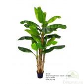 Planta Bananera