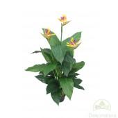 Planta Sterlizia Mediana