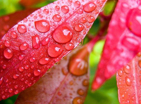 Dekonatura. Plantas y flores artificiales