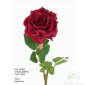 Rosa Abierta Roja