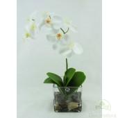 Orquidea Phalaenopsis Natur Blanca